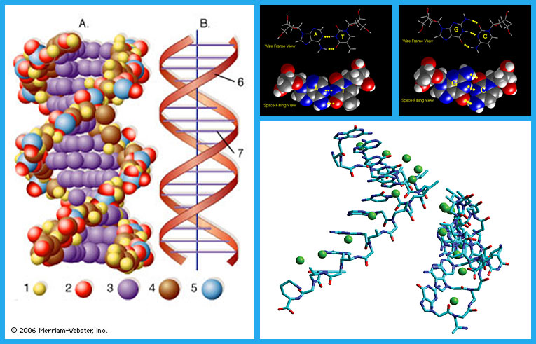 the use of the dna in medical diagnosis Use dna aptamers as a diagnostic tool for human diseases, we listed some dna   in the era of personalized medicine, dna aptamer-based.